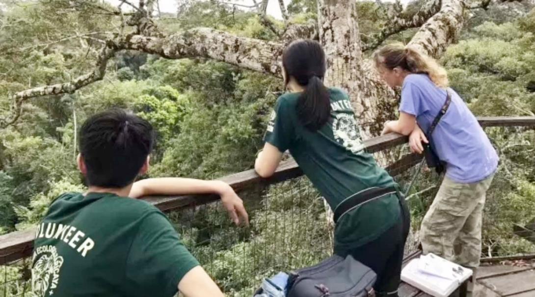 ペルーの熱帯雨林にある観察台から野鳥の調査活動にあたる高校生ボランティア